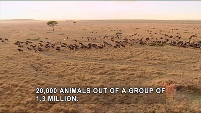 Still image from Jack Hanna's Wild Countdown: Going The Distance