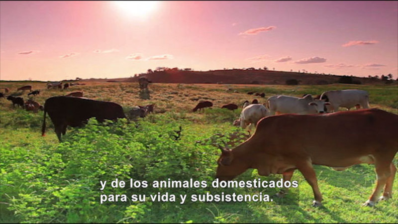Still image from Social Studies Video Vocab: Agrarian Society (Spanish)