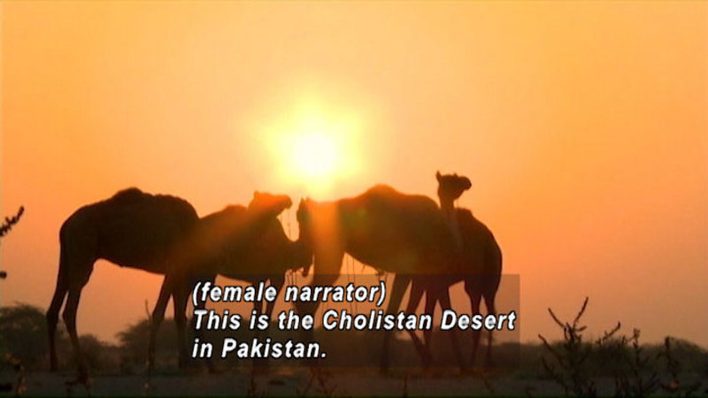 Still image from Pakistan: Children Of The Desert