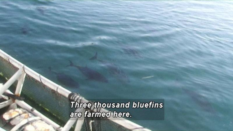 Still image from Tuna: Cross-Species Surrogacy