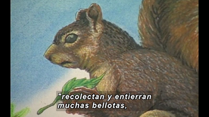 Still image from Kool Books: Jaguars, Toucans, And Other Animals (Spanish)