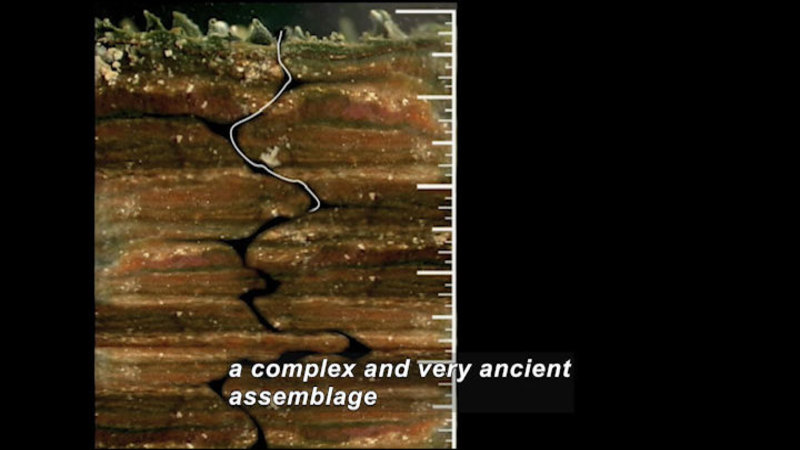 Still image from Microscopic Monsters: Stromatolite Explorer: Voyage Through A Microbial Mat