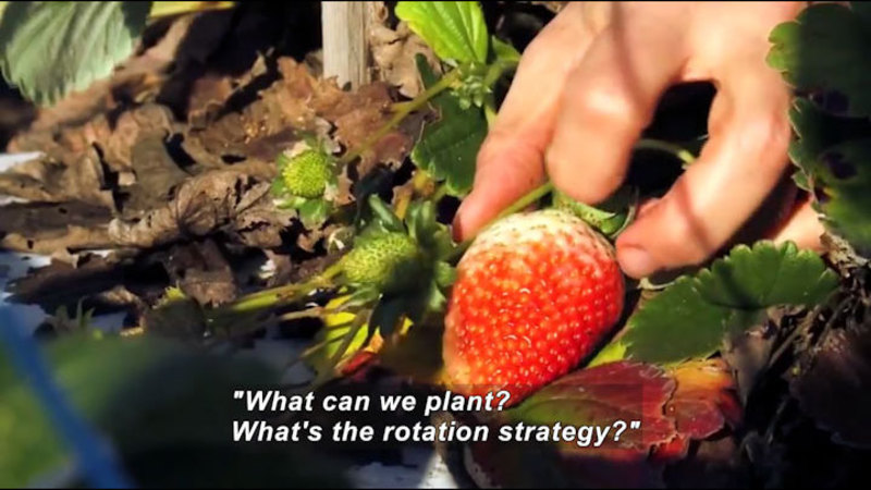 Still image from Science Nation: Strawberry Fields Forever