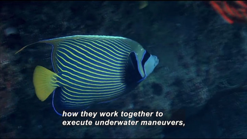 Still image from Science Nation: Engineers Are Schooling Themselves on Fish Maneuvers
