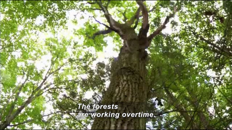 Still image from Science Nation: Rising CO2 Levels Make Forests Work Overtime