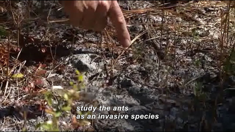 Still image from Science Nation: Fire Ants--Coping With These Invasive Insects