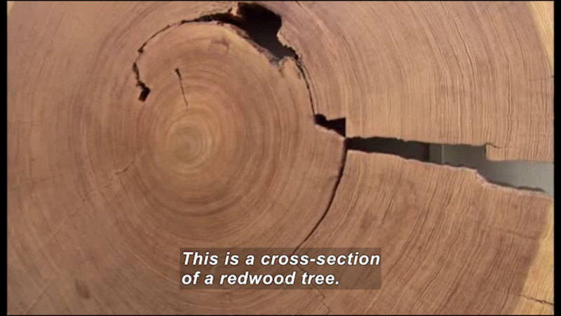 Still image from Science Nation: Lord Of The Tree Rings