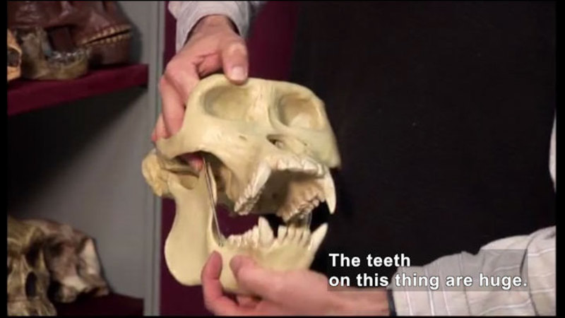 Still image from Science Nation: If These Teeth Could Talk