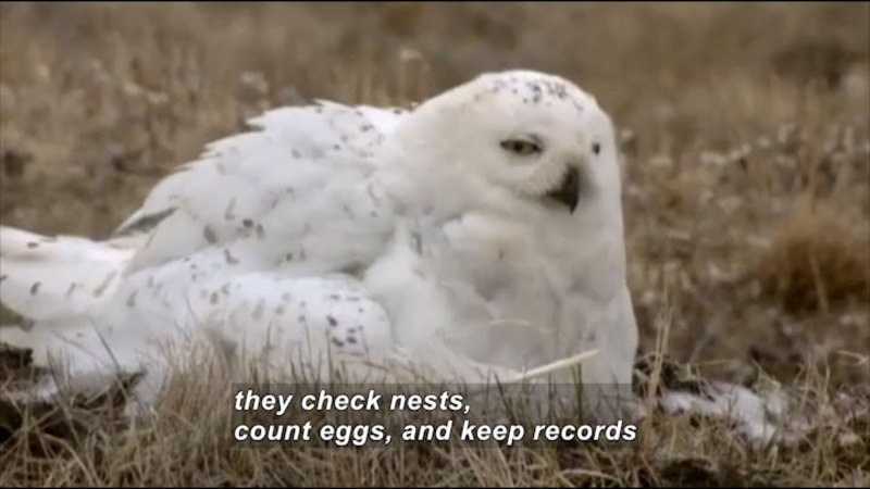 Still image from Science Nation: Birds, Climate Change, and Citizen Science
