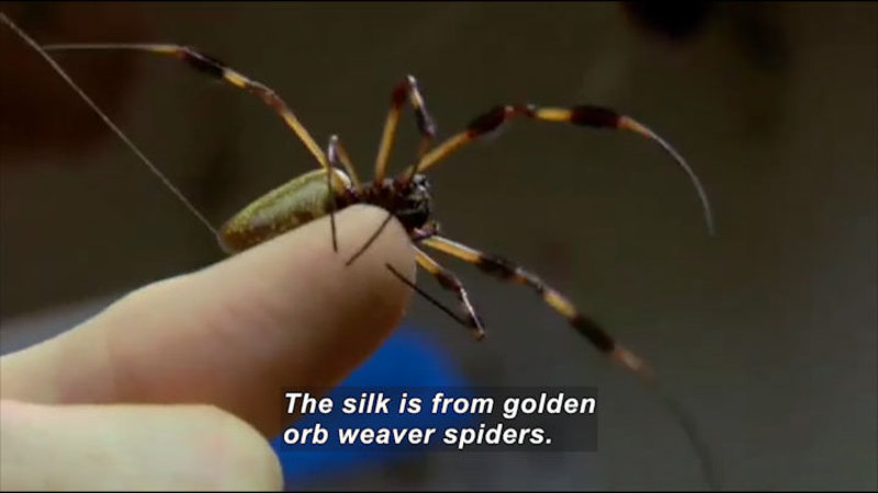 Still image from Science Nation: Spider Silk