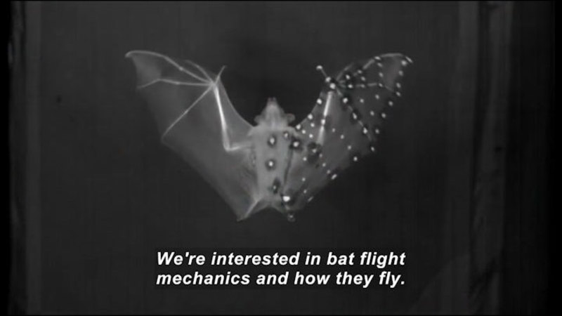 Still image from Science Nation: Batty For Bat