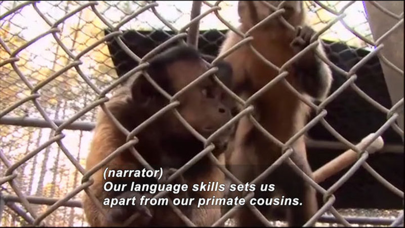 Still image from Science Nation: Monkey Business
