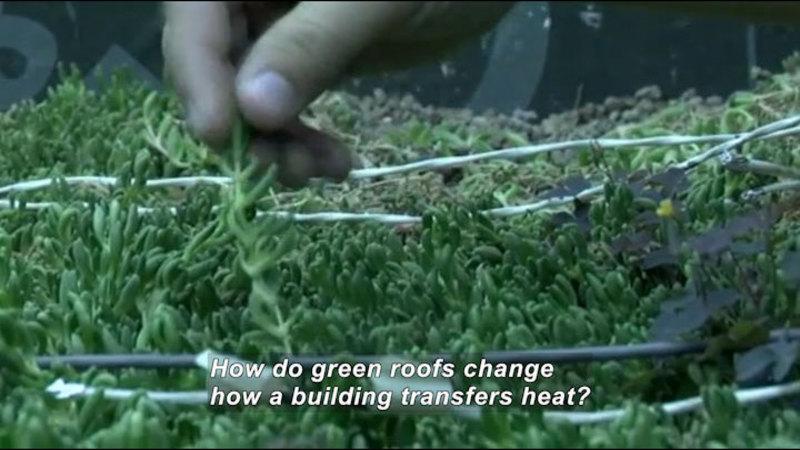 Still image from Green Revolution: Green Roofs