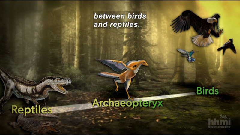 Still image from Great Transitions: The Origin of Birds