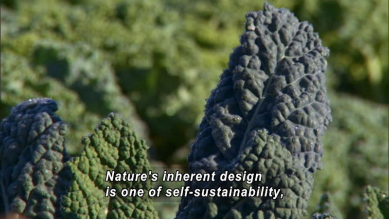 Still image from Anna Lappé: Sustainable Farming