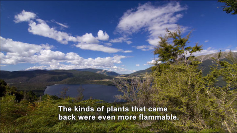 Still image from Core Of The Problem: The Fire History Of New Zealand's Landscape