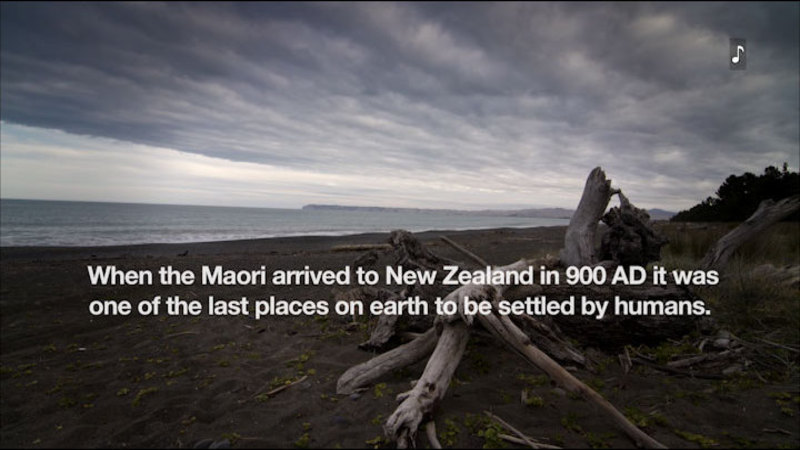 Still image from The Maori Of New Zealand: Culture, History, And Fire