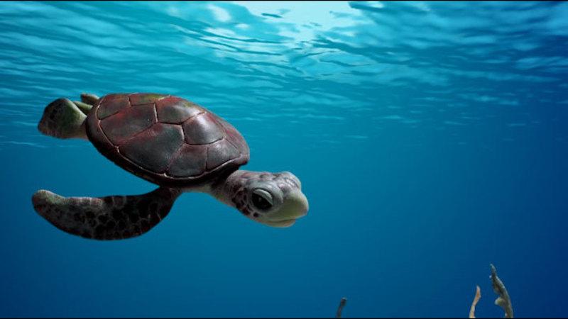 Sea Creatures Endangered Species Overdrive Subtopic Endangered Species