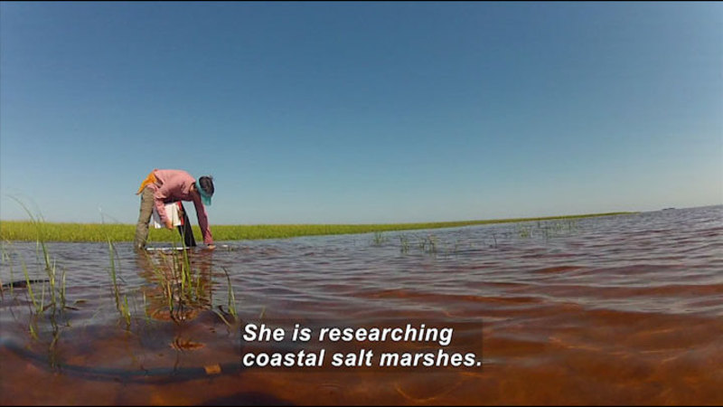 Still image from In The Grass, On The Reef: The True Value Of A Salt Marsh