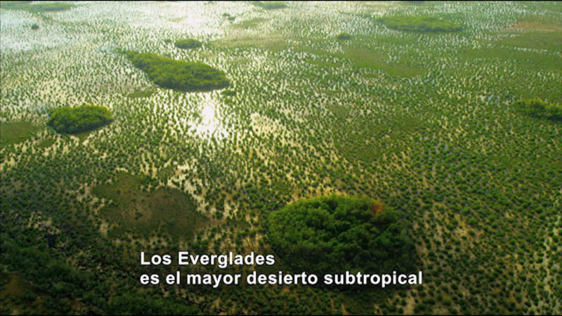 Still image from Science Video Vocab: The Everglades (Spanish)