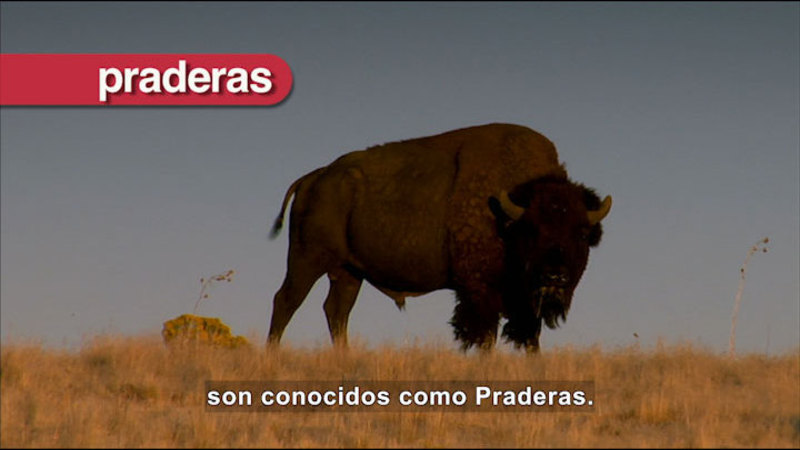 Still image from Science Video Vocab: Grasslands (Spanish)
