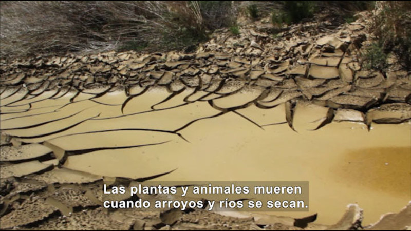 Still image from Science Video Vocab: Drought (Spanish)
