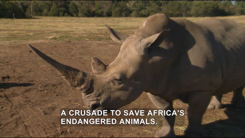 Still image from Dr. Chris Pet Vet: African Adventure