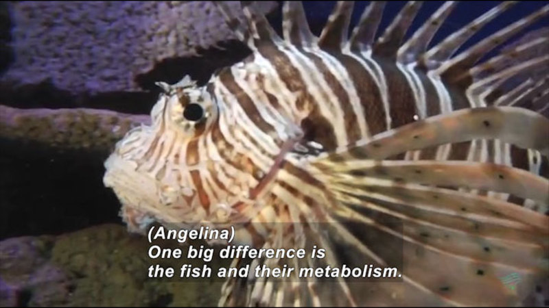 Still image from Aquarist: Career Profile