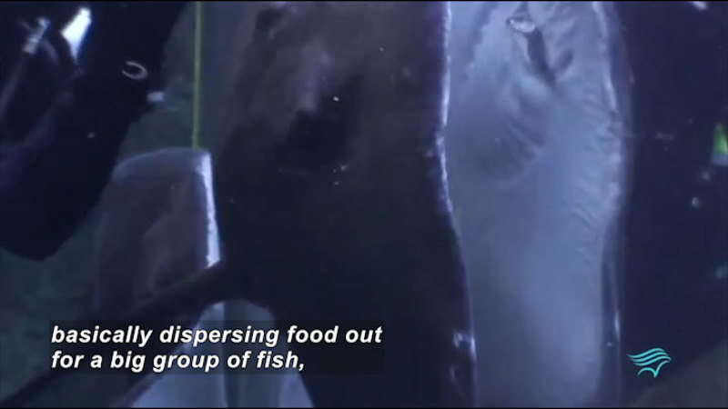 Still image from Aquarist: Feeding Time