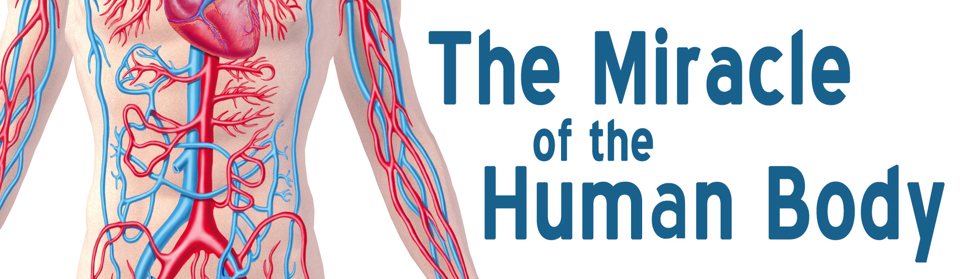 The Miracle Of The Human Body