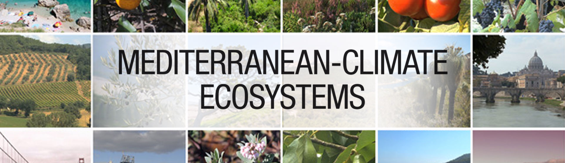 Mediterranean-Climate Ecosystems